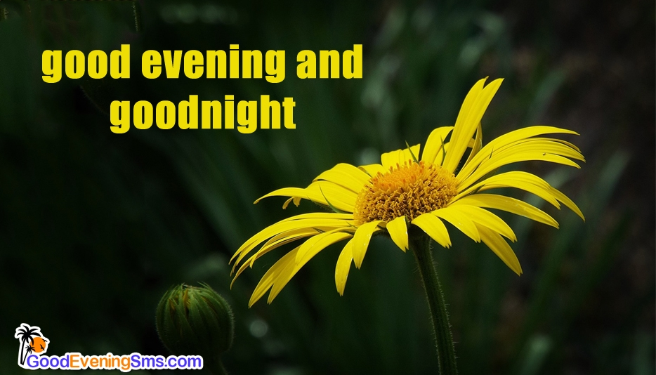 Good Evening And Goodnight Ecard