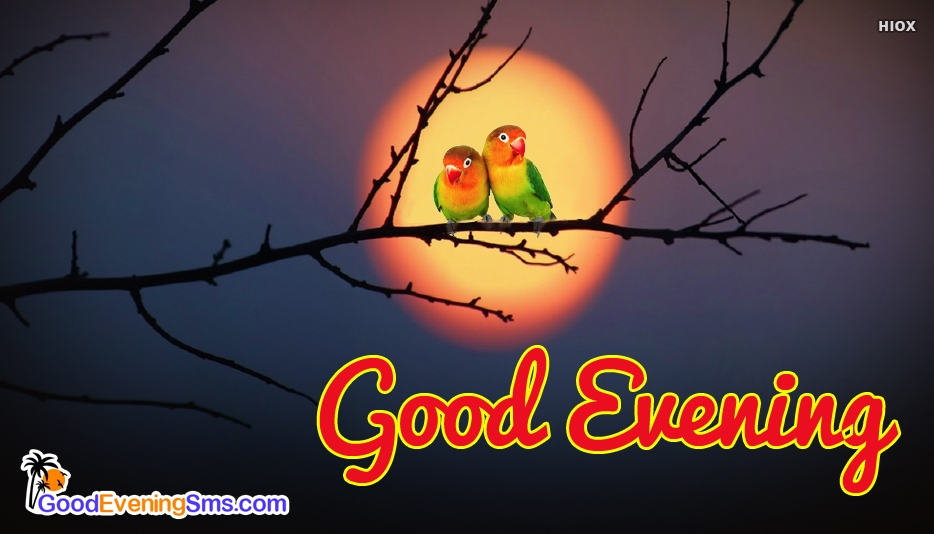 Good Evening Birds @ GoodEveningSMS.com