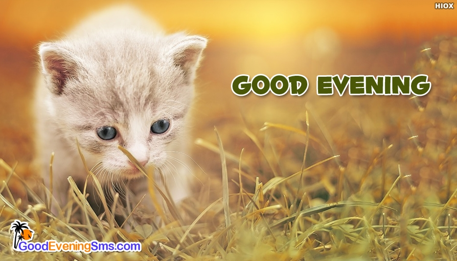 Good Evening Cat Images