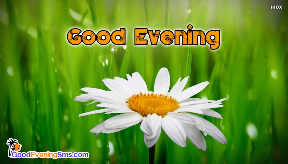 Good Evening Cute - Good Evening SMS for Whatsapp