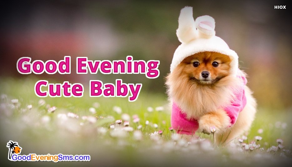 Good Evening SMS Baby Images