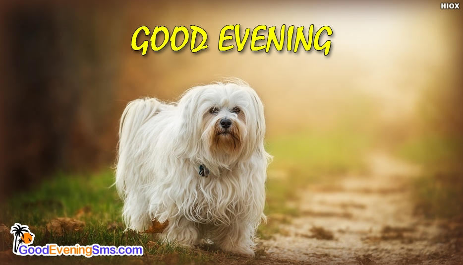 Good Evening Dog - Good Evening SMS for Cute