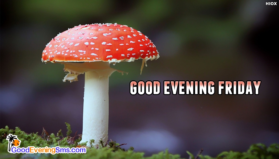 Good Evening Friday - Good Evening SMS for Friday