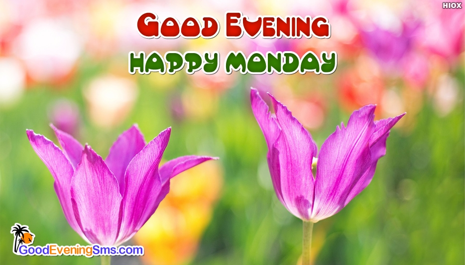 Good Evening Happy Monday - Good Evening SMS for Monday