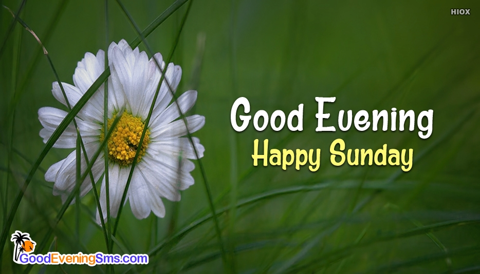 Good Evening Happy Sunday - Good Evening SMS for Sunday