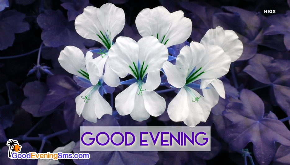 Good Evening Hd Image