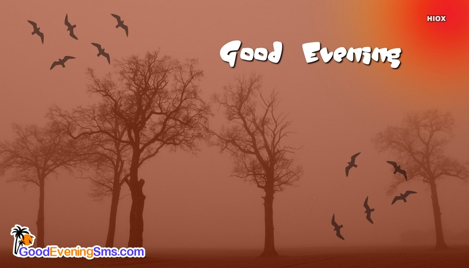 Good Evening Trees Images, Pics