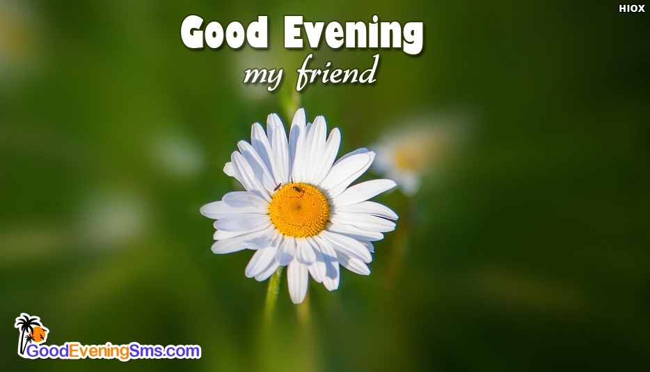 Good Evening Ma Friend - Good Evening SMS for Friend