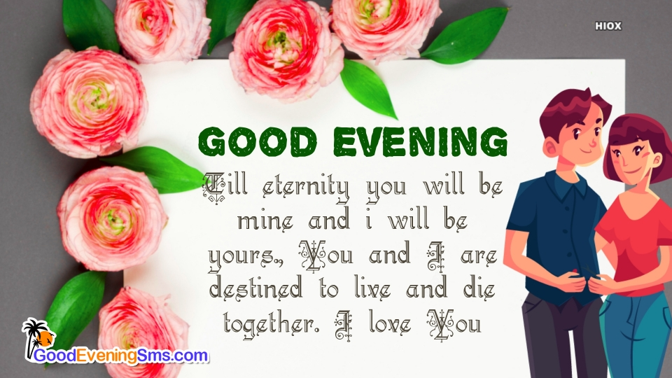 Good Evening Love Message With Rose