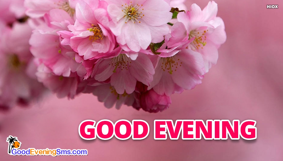 Good Evening Pink Image