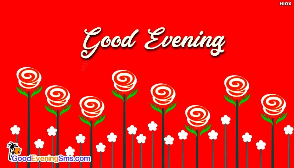 Good Evening Rose