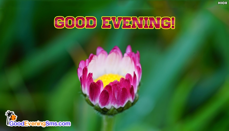 Good Evening Sticker - Good Evening SMS for Colleagues