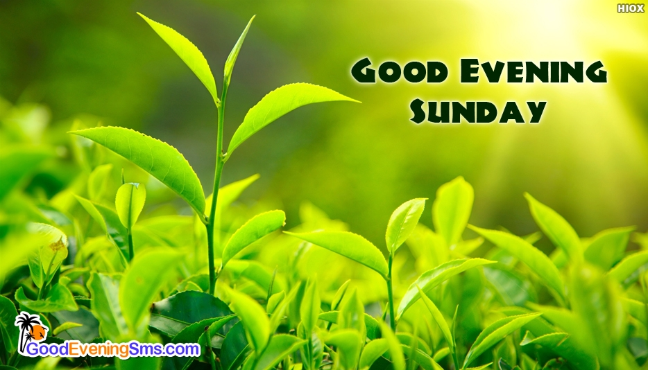 Good Evening Sunday - Good Evening Sunday Images