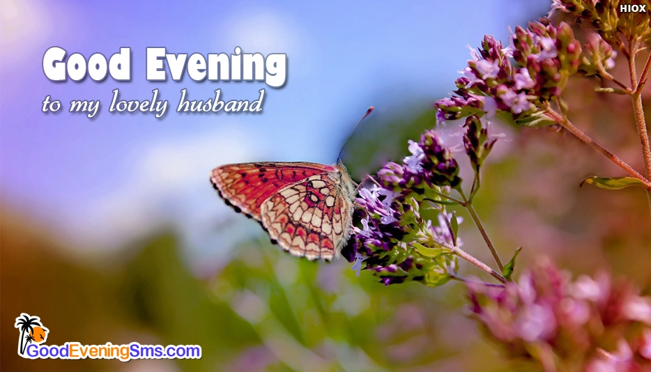 Good Evening To My Lovely Husband - Good Evening SMS for Hubby