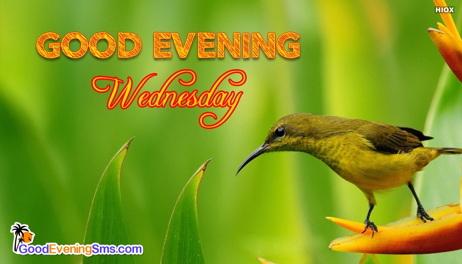 Good Evening Wednesday - Good Evening Wednesday Images
