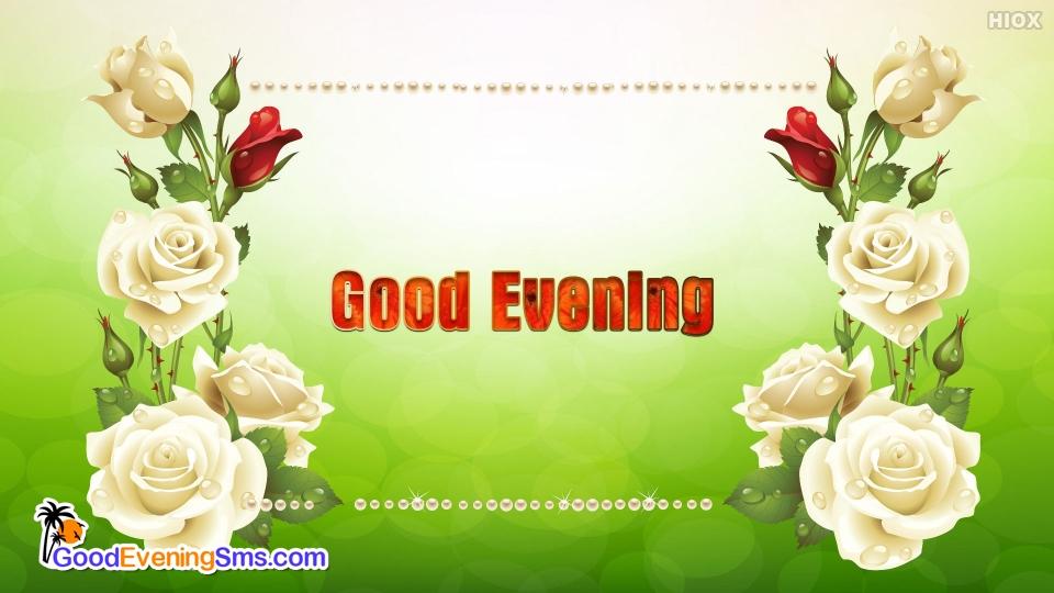 Good Evening White Roses