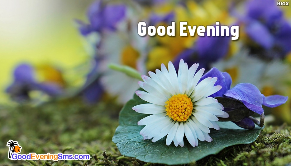 Good Evening Wishes For Facebook -  Good Evening SMS For Facebook