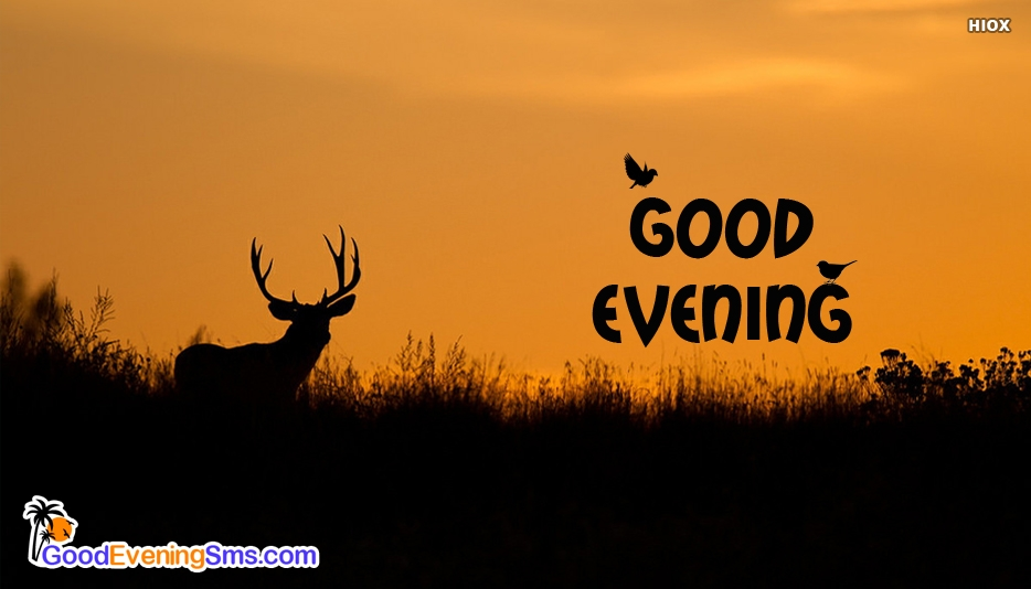 Good Evening With Deer - Good Evening SMS for Wallpaper