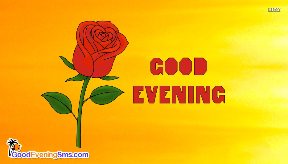 Rose With Good Evening