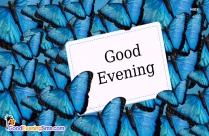 Butterfly Good Evening