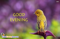 Good Evening Bird