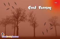 Good Evening Nature Quote