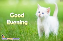 cute good evening image
