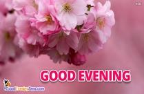 Good Evening Pink