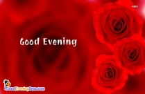 Good Evening Red Rose