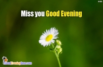 Miss You Good Evening