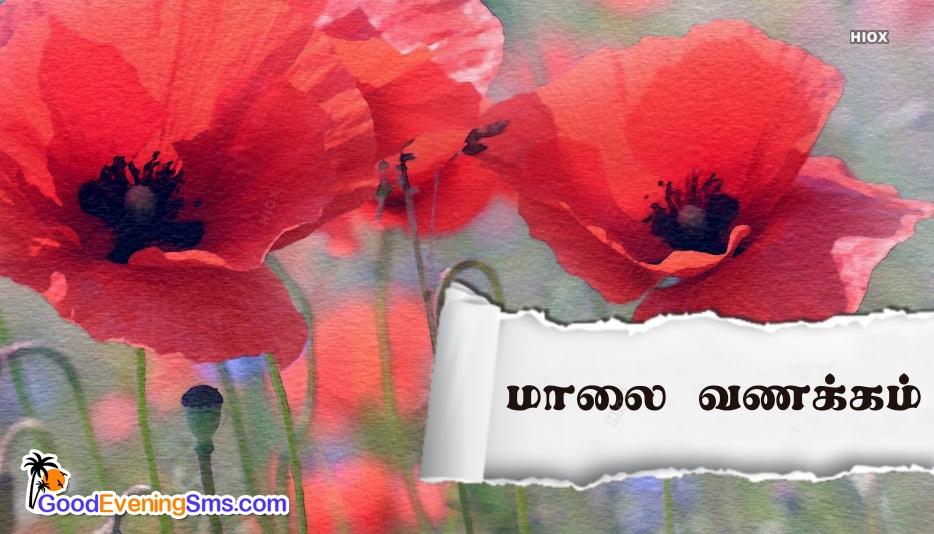 மாலை வணக்கம் Image