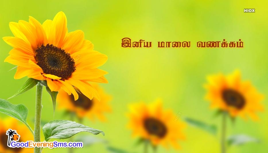 Good Evening In Tamil Language